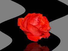 Free Red Rose On A Black Background Stock Images - 16569554
