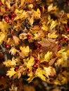 Free Autumn Dream Stock Photo - 16574500
