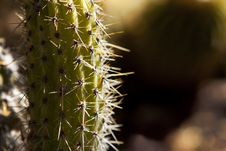 Free Cactus In Sunlight Royalty Free Stock Image - 16570296