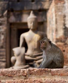 Free Monkey Buddah Royalty Free Stock Photo - 16570365