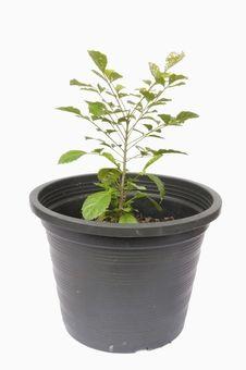 Free Small Tree As White Background Royalty Free Stock Photo - 16572895