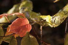 Free Autumn Leaf Stock Image - 16573071