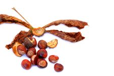 Free Chestnuts Stock Image - 16574661
