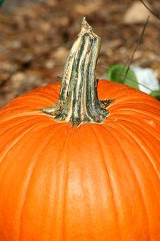 Free Pumpkin Stem Stock Photo - 16575000