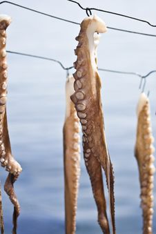 Free Octopus Set To Dry Stock Image - 16575231