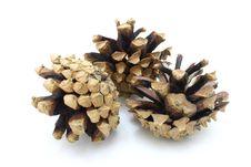 Free Pine Cones Stock Image - 16575951
