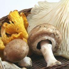 Free Mushrooms In Autumn Royalty Free Stock Photos - 16576188
