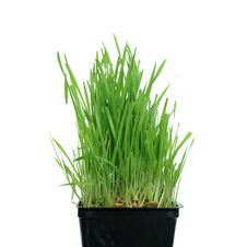Free Grass Growing From Roots Stock Photo - 16578430