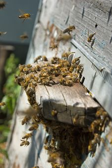 Free On A Visit On An Apiary Stock Photos - 16578673