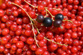 Free Berry Background. Royalty Free Stock Image - 16582836