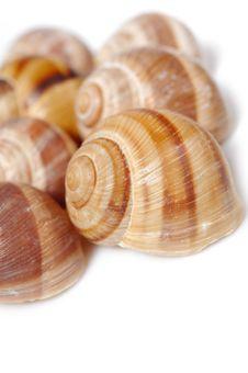 Free Many Beautiful Sea Shell. Stock Photography - 16581152