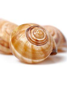 Free Many Beautiful Sea Shell. Royalty Free Stock Photo - 16581165