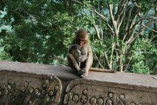 Free Lonely Burmese Monkey Stock Image - 16581691