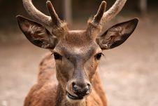 Free Deer Stock Photos - 16581823