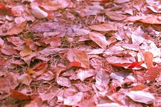 Free Autumn Stock Images - 16581934