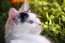 Free White Cat Stock Photo - 16582020
