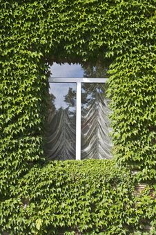 Free Window With Ivy Leafs Royalty Free Stock Photo - 16582275