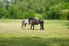 Free Two Horsies . Royalty Free Stock Images - 16582869
