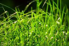 Free Grass Stock Photo - 16584210