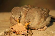 Free Two Birds Stock Photo - 16587800