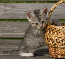 Free Kitten Royalty Free Stock Images - 16588609