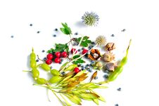Free Autumn Bouquet Royalty Free Stock Photography - 16589227