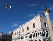 Sea Gull At Basilica Di San Marco Venice Italy Royalty Free Stock Photo