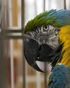 Free Parrot Royalty Free Stock Photos - 16592958