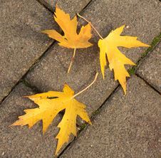 Free Autumn Leaves On Pavement Stock Images - 16593404
