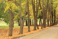 Free Autumn Alley In The Park Royalty Free Stock Photography - 16593657