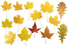 Free Collection Beautiful Colorful Autumn Leaves Stock Image - 16593681