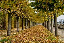 Free Autumn Alley Stock Photos - 16594543