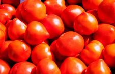 Free Red Tomatoes Royalty Free Stock Image - 16594606