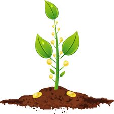 Free Young Plant With Golden Coins Stock Photo - 16594770