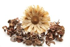 Dry Flower Royalty Free Stock Image