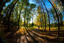 Free Autumn Trees Royalty Free Stock Image - 16597016