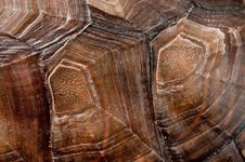 Free Turtle Shell Stock Images - 16597314