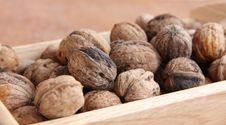 Free Macro View Of Walnut Royalty Free Stock Photography - 16597837