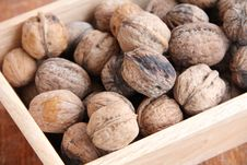Free Macro View Of Walnut Stock Image - 16597841