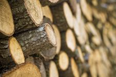 Free Heap Of Log Arranged In Order Stock Photo - 16598290