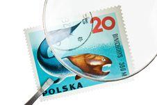 Free Postage Stamp Under Magnifier With Tweezers Stock Images - 16598574