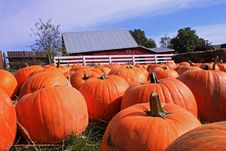 Free Pumpkin Patch Stock Photo - 16598620