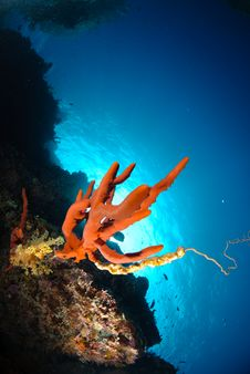 Free Red Sponge Royalty Free Stock Image - 16599836
