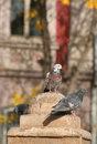 Free Pigeons In The City Royalty Free Stock Photos - 1662558