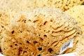 Free Sponges Stock Photo - 1664370