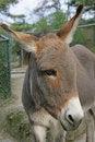 Free Donkey 7 Stock Image - 1664751