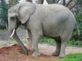 Free Elephant 14 Royalty Free Stock Photography - 1665997