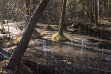 Free Bog In The Forest Royalty Free Stock Images - 1661759