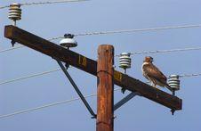 Free Hawk Royalty Free Stock Photography - 1662517