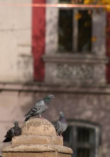 Pigeons In The City Stock Photography